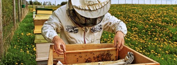 Pesticides néonicotinoïdes : faute de majorité qualifiée, la Commission européenne tranchera