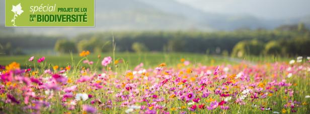 Le Sénat adopte le projet de loi biodiversité en première lecture