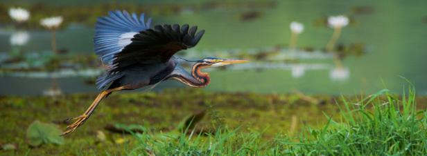 Quatorze ONG pressent le Gouvernement à réagir face à l'effondrement de notre patrimoine écologique