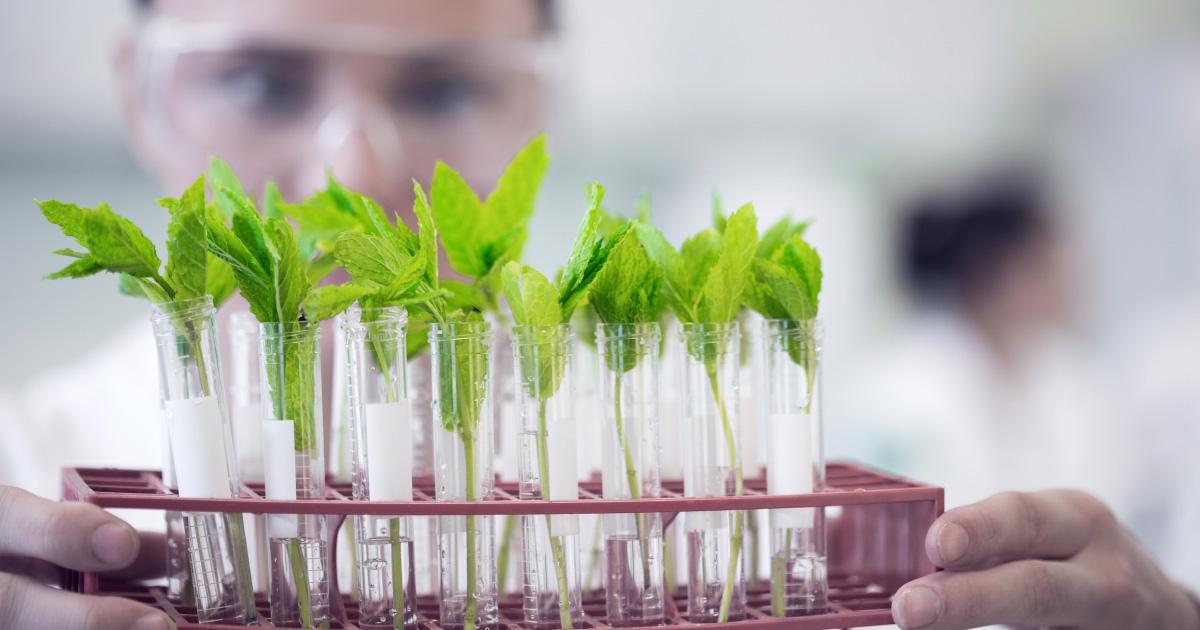 растения опыты картинки выбравший непростую профессию