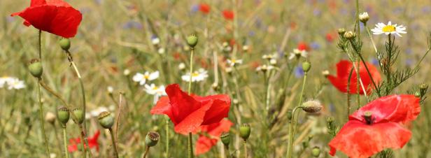 Agroalimentaire: un projet européen aide les industriels à intégrer la biodiversité dans leur référentiel