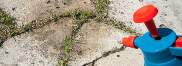 Glyphosate : les recours s'accumulent contre l'herbicide de Monsanto