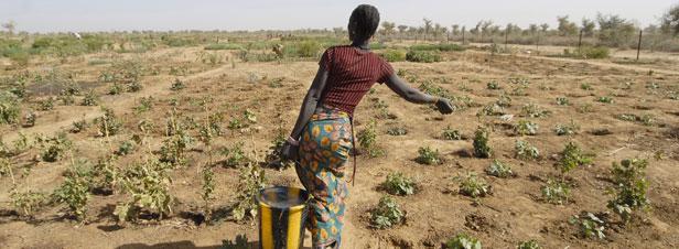 Climat: lancement d'une Commission internationale pour développer des solutions d'adaptation