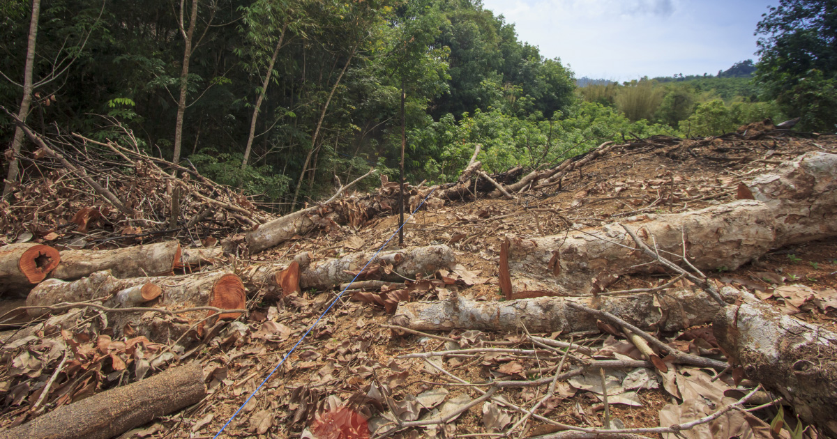 Les députés suppriment de justesse une niche fiscale favorable à l'huile de palme