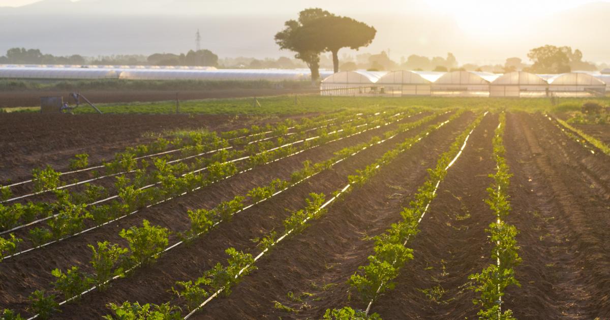 Eaux usées épurées: le projet de règlement européen se recentre sur l'irrigation