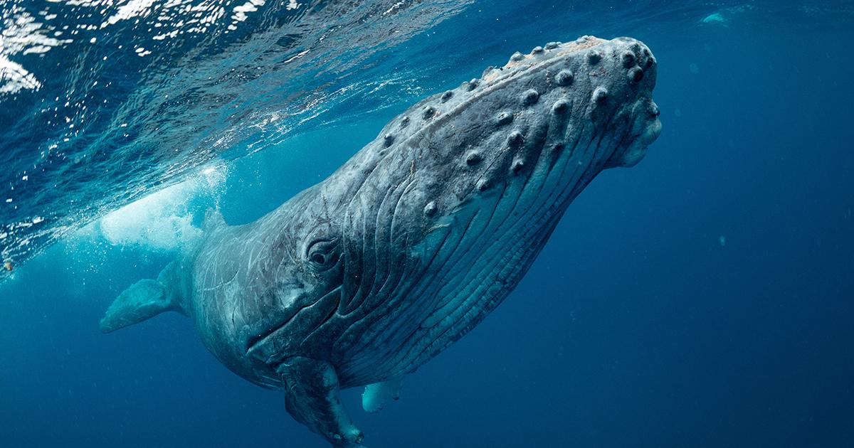 Quand le FMI vient au secours des baleines