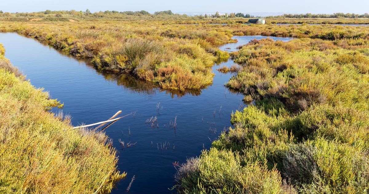 La mission d'information sur la réhabilitation de l'étang de Berre lance une consultation citoyenne