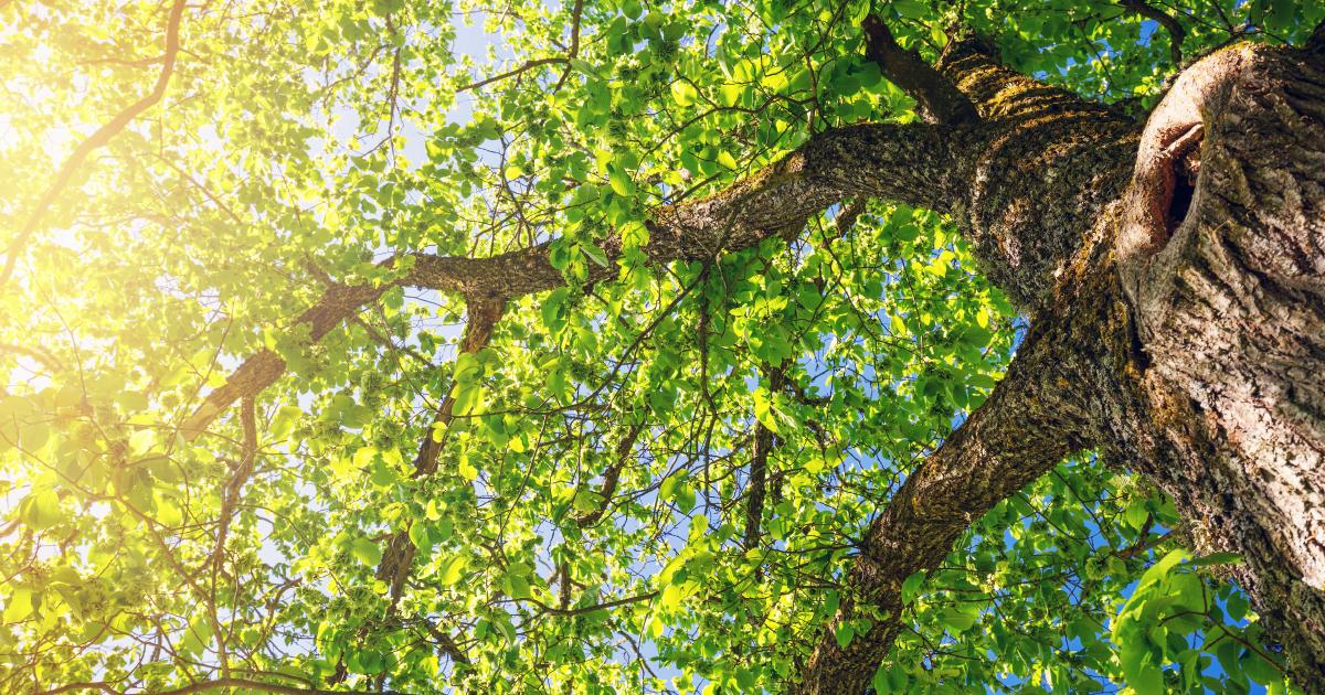 Stratégie d'adaptation au changement climatique: la Commission européenne consulte le public
