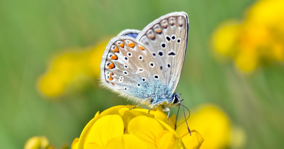 Natura 2000: le réseau profite aussi aux oiseaux non ciblés, moins aux insectes