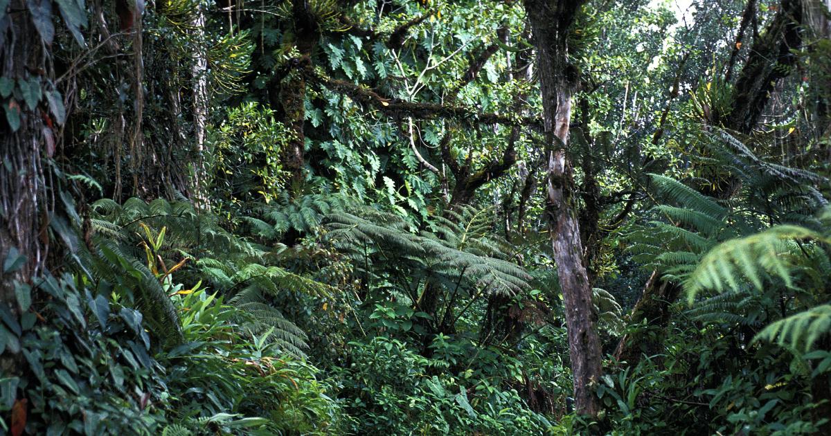 Le rôle de réservoir de carbone des forêts tropicales menacé au-dessus de 32°C