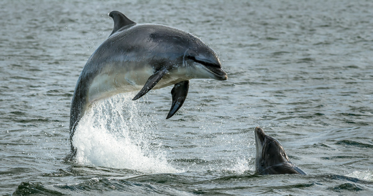 Dauphinstués: les scientifiques préconisent une fermeture temporaire de la pêche