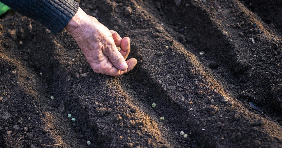 La vente de semences paysannes aux jardiniers amateurs est désormais possible