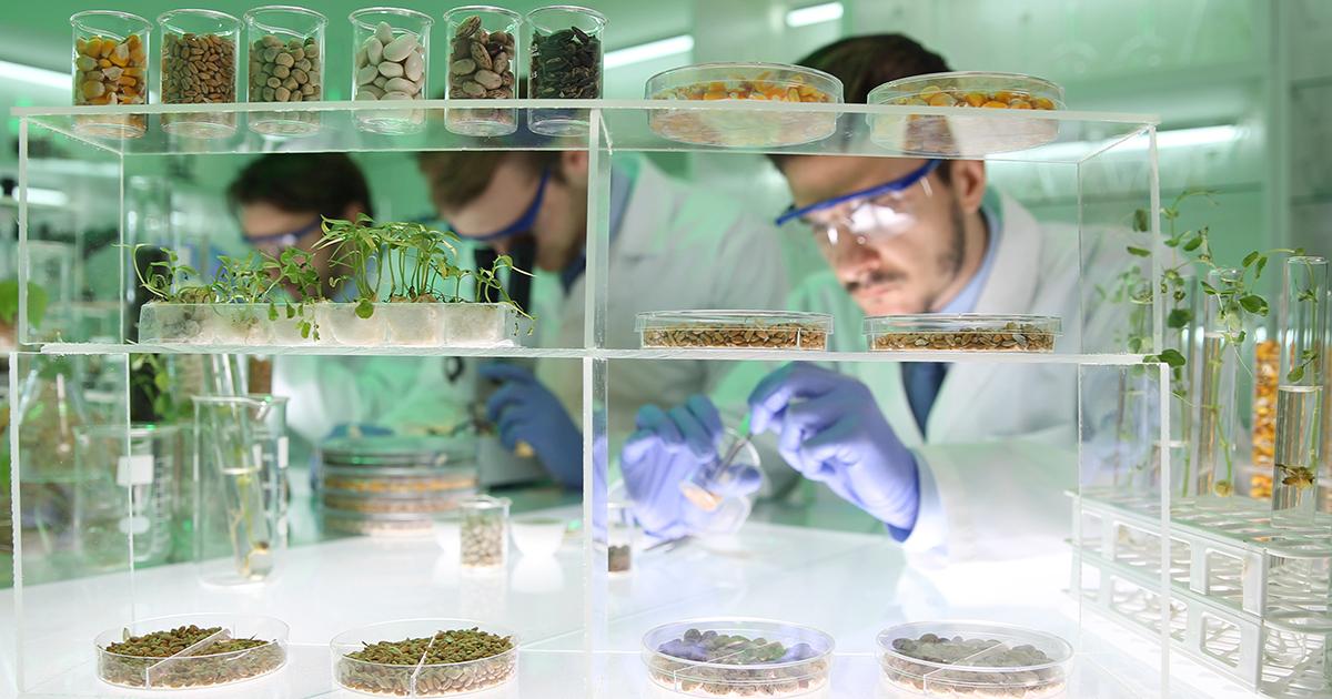 OGM issus du forçage génétique: lettre ouverte de seize ONG à Jean Castex