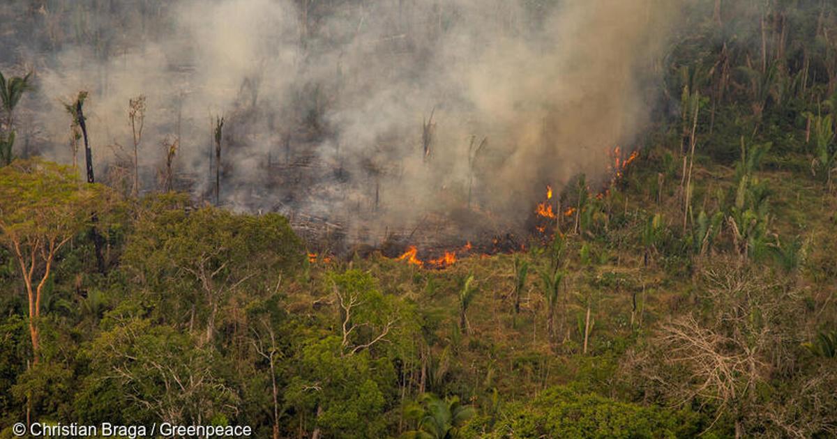 Incendies en Amazonie: Greenpeace fustige les importations françaises de soja