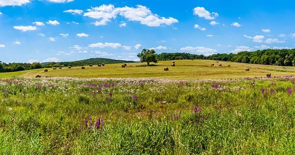 Natura 2000: l'OFB lance un troisième AMI sur le suivi des mesures de gestion