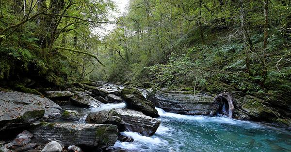 Étendre les aires protégées contribue à protéger les forêts primaires en Europe