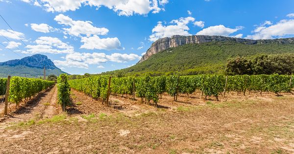 Occitanum, lancement d'un laboratoire d'innovation sur l'agriculture et l'alimentation en Occitanie