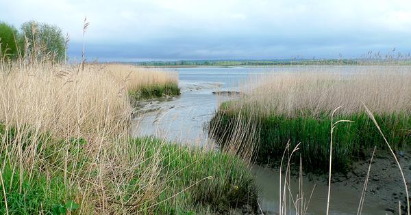 La Normandie lance son Agence régionale de la biodiversité