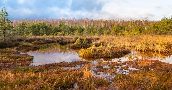 Biodiversité: consultation sur la mise en place d'objectifs européens juridiquement contraignants
