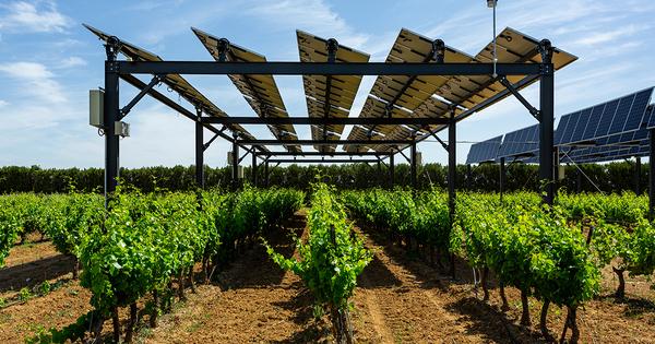 Agrivoltaïsme: Sun'Agri et Rgreen Invest lance une initiative pour équiper 300 exploitations agricoles