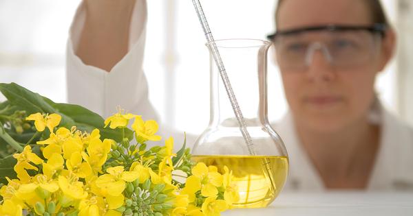 Transformation de la biomasse: l'Ademe soutient 30 projets de recherche