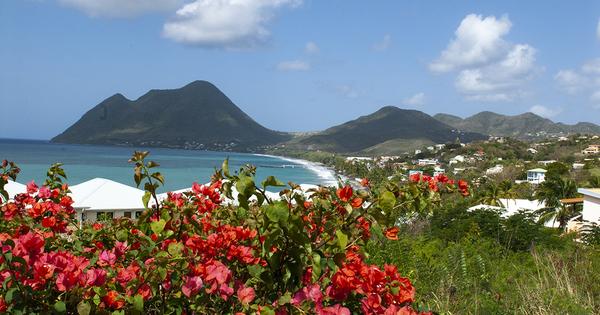 Antilles: alerte sur un ver invasif, qui pourrait menacer la biodiversité des sols