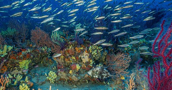 Un atlas fait le point sur la conservation des herbiers de Posidonie et du coralligène méditerranéens