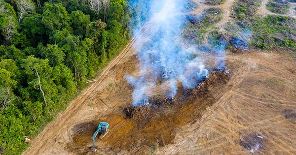 Biocarburants: l'huile de soja se substitue à l'huile de palme, une aberration pour les ONG