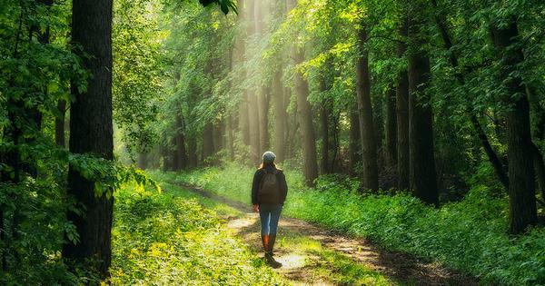 Accès à la nature: les écologistes déposent un référé liberté devant le Conseil d'État