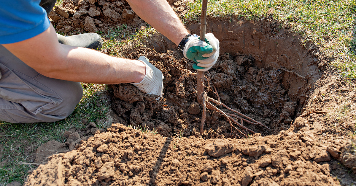 Agroforesterie: un appel au mécénat pour financer des projets