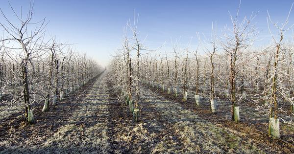 Plan de relance: lancement des premières mesures pour l'agriculture