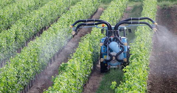 Pesticides: deux châteaux viticoles condamnés pour un épandage à proximité d'une école