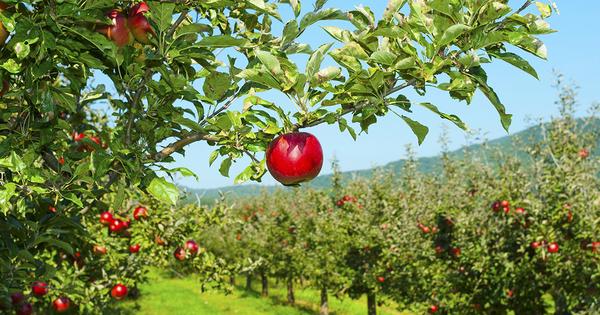 Haute valeur environnementale: plus de 8 000 exploitations agricoles certifiées