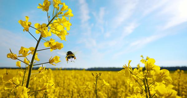 Variétés tolérantes aux herbicides: le Gouvernement va procéder par ordonnance