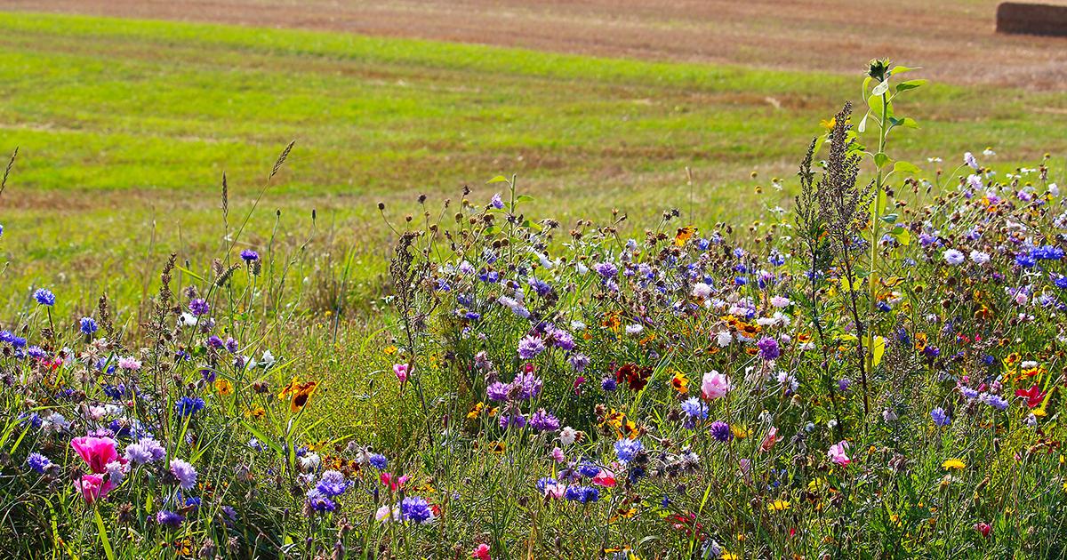 Politique agricole commune: comment la rendre compatible avec les objectifs environnementaux