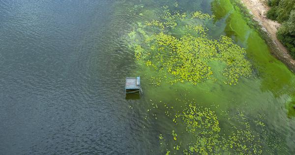 Risques microbiologiques: l'agence de l'eau Rhin Meuse lance un appel à manifestation d'intérêt