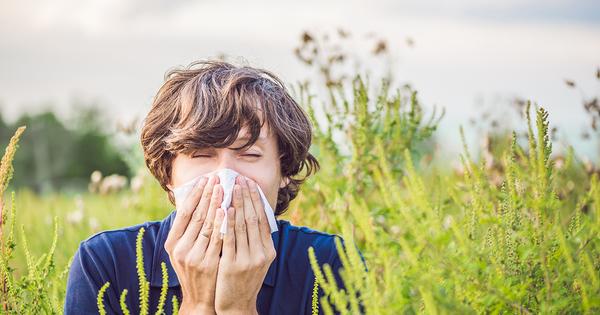 Allergies: l'impact sanitaire du pollen d'ambroisie coûte très cher