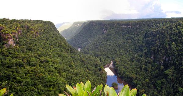 Mine d'or en Guyane: condamnation pénale et reconnaissance du préjudice écologique
