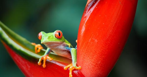 Liste rouge de l'UICN: 31 espèces déclarées éteintes