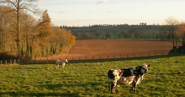 Agriculture: lancement d'un appel à projets «diagnostic carbone»