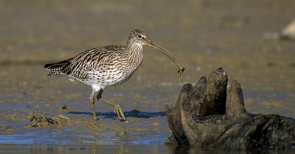 La chasse doit être suspendue si la conservation de l'espèce n'est pas assurée