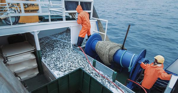Plan de relance: deux appels à projets dédiés à la pêche et l'aquaculture «durables»