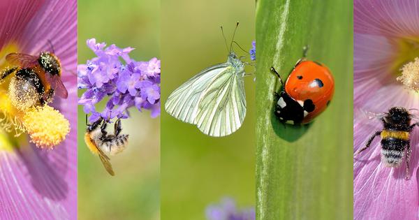 Atlas de la biodiversité communale et restauration des écosystèmes: deux nouveaux appels à projets