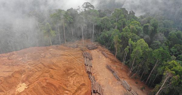 Déforestation importée: lancement d'une plateforme d'observation et de lutte
