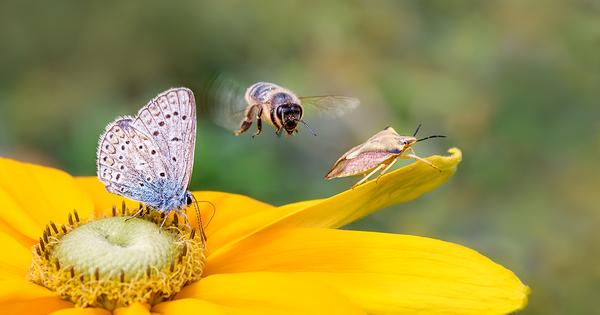 Déclin des insectes: le cri d'alarme de l'Académie des sciences
