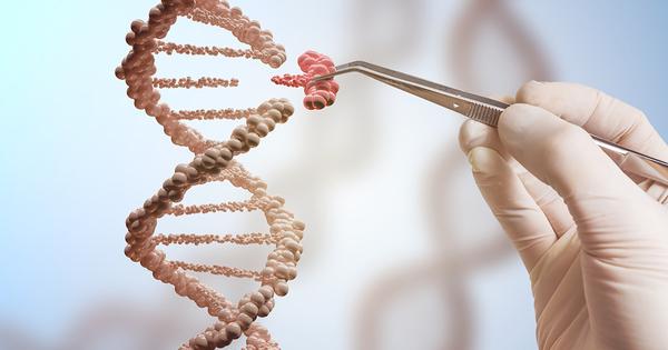 L'Anses a développé une technique pour identifier les OGM interdits