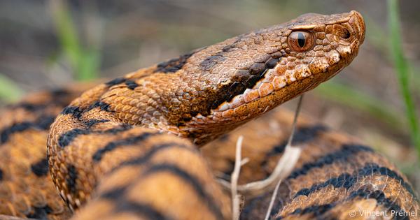 Les reptiles et amphibiens de France métropolitaine gagnent en protection