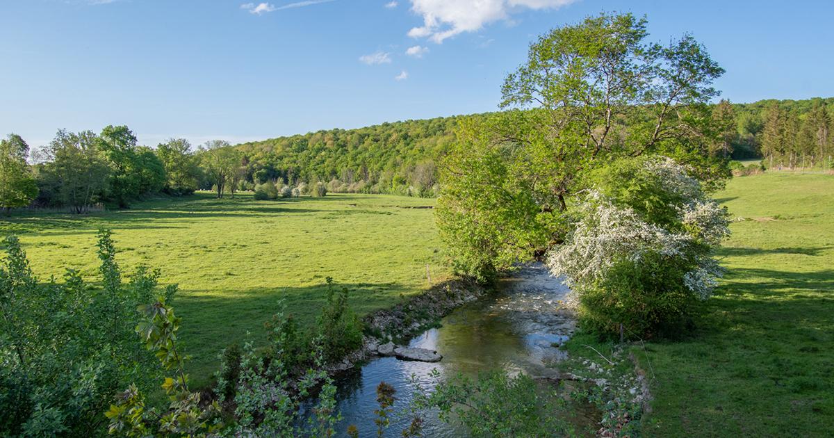 L'agence de l'eau Seine Normandie lance un appel à projets dédié aux prairies permanentes