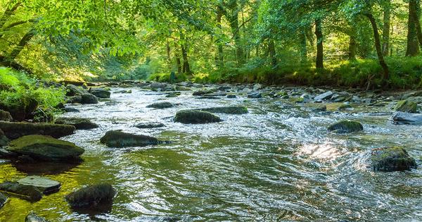 Bon état des eaux et gestion des inondations: lancement de la consultation publique