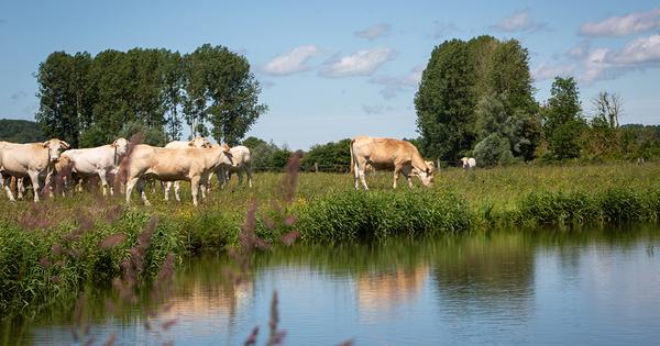L'agence de l'eau Artois Picardie lance un appel à projets pour aider l'élevage à l'herbe